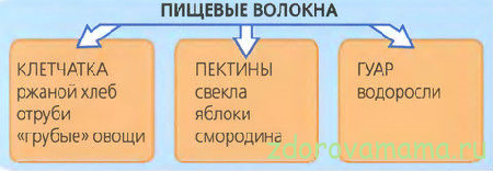Rol-pishhevyih-volokon-v-pitanii