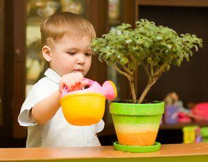 растения для детской